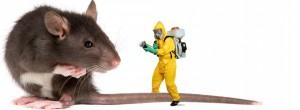 خبراء-رش-المبيدات-بالقطيف