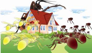 أفضل رش مبيدات بالخبر
