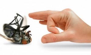 اقضي-على-الحشرة-برش-المبيدات