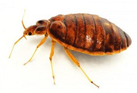 شركة مكافحة الحشرات بالقطيف