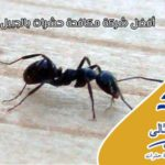 شركة مكافحة حشرات بالجبيل – اتصل الان 0552744429