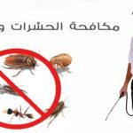شركات مكافحة الحشرات بالجبيل 0552744429 خدمات متميزة باسعار خيالية
