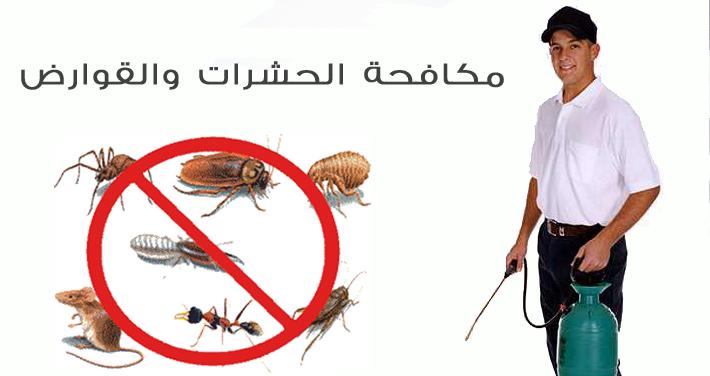 شركات مكافحة الحشرات بالجبيل